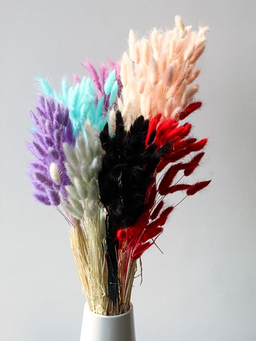Red Bunny Tail Dried Pampas Grass