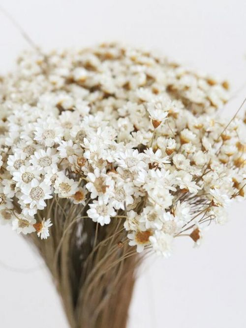 Natural Dried Star Flower