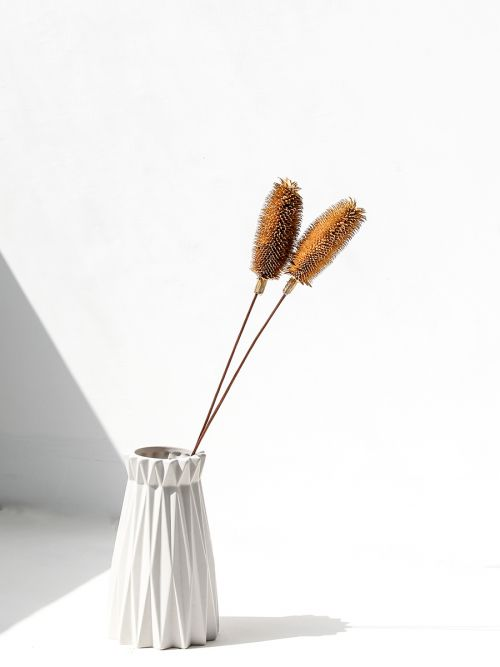 Dried Dipsacus Thistle Dry Pampas Grass