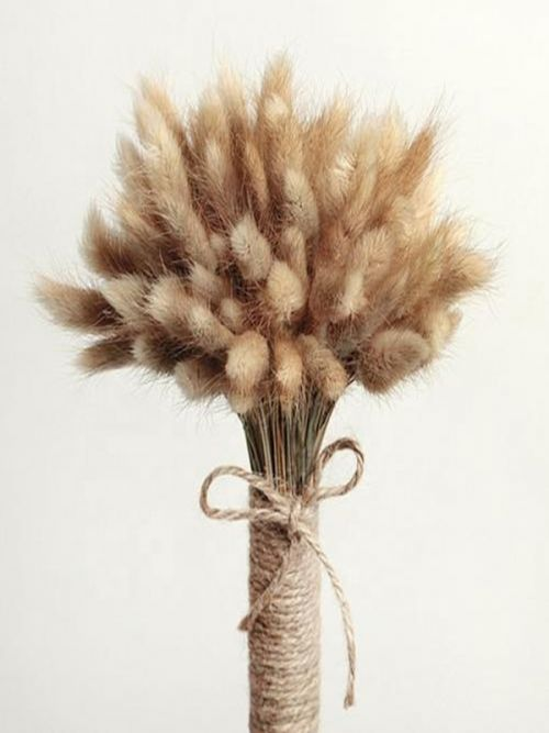 Natural Brown Bunny Tail dry grass