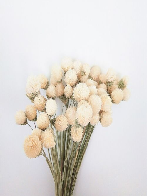 White Strawberry Fruit Dried Flowers