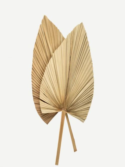 Yellow Hand Fan Palm Leaves dry grass