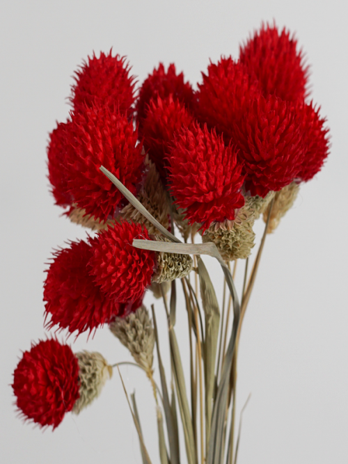 Red Strawberry Fruit Dried Flowers