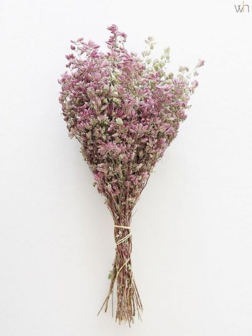 Dried Flowers Purple Don't Forget Me Flower